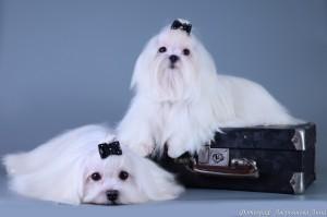 Наши собаки