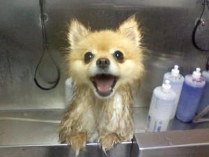 грязнуля моется
