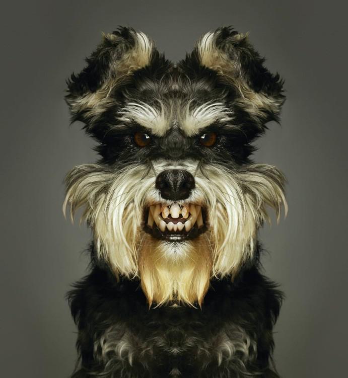 зубастый пес 2