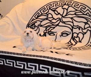Принцесса Тиффани