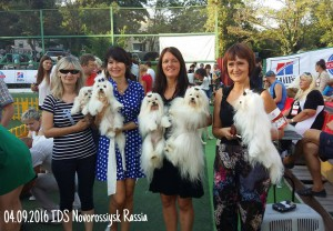 novorossiysk-malteze-vart-royal-escort-kennel